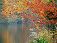 Autumn at Water's Edge