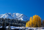 Mountain and Aspen