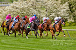 Racing Past the Dogwoods